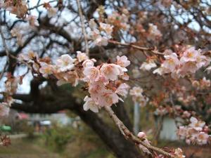 桜と紅葉06
