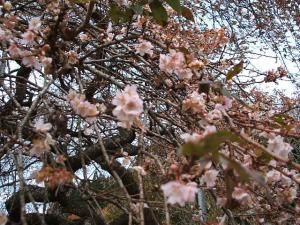 桜と紅葉05