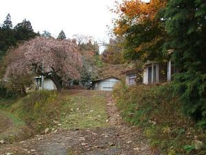 桜と紅葉01