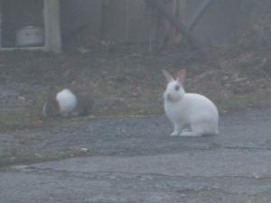 え、ウサギ!02
