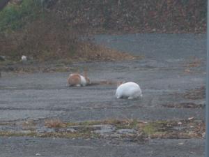 え、ウサギ!01