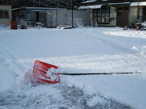 雪と犬01