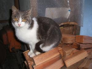 猫0040