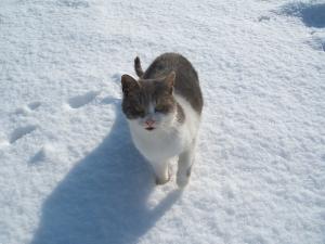 パパあたいも雪かき手伝うわ