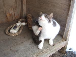 猫0015