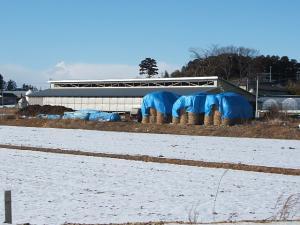 汚染牧草001