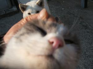 気持ちいい、猫耳でカス溜まってるの