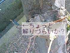 08-01-09_11-09.jpg