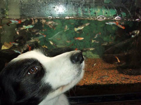 熱帯魚が大変だ!