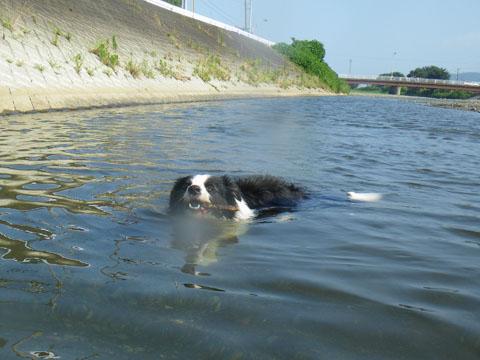 何処で泳いでる?