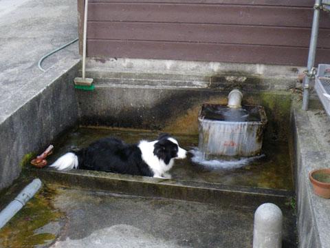 湧き水は気持ち良い