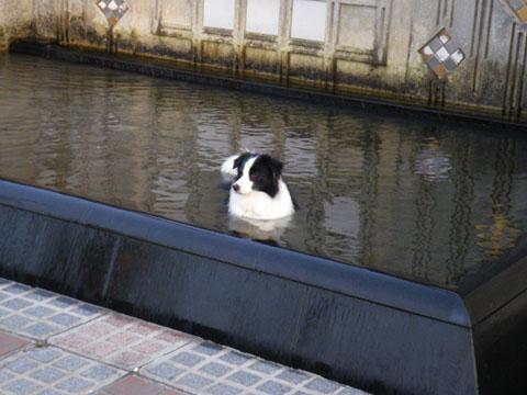 湧水公苑の水は冷たい