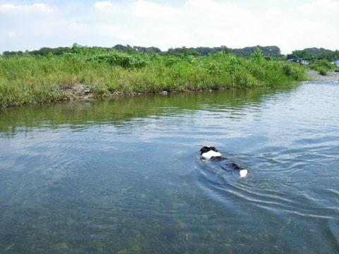 中津川で泳ごう