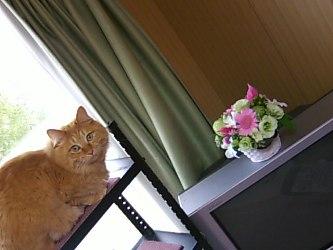 誕生日花とシフォン