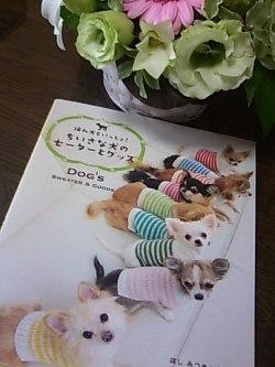 犬セーター本