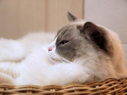 ただ眠いだけらしいです。