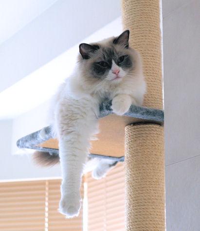 ダメ人間には猫パンチが飛んできます。
