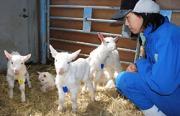 佐久市新子田の家畜改良センター長野牧場で