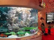碧南市の碧南海浜水族館で