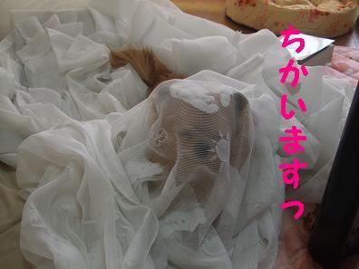 2009_0501_082622.jpg
