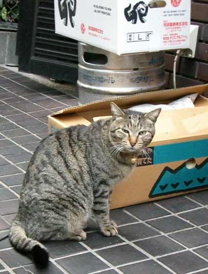 gato0811ishi1.jpg