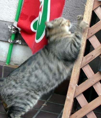 gato0811ishi2.jpg