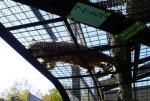 20081106頭上にヒョウが