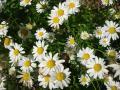 目に映る花 1