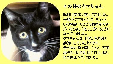 実家の猫クマちゃん(8/9撮影)