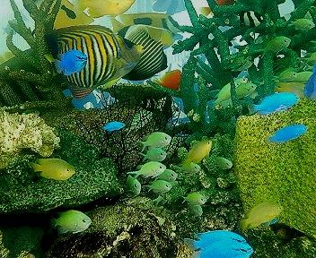 銀座屋外水槽の熱帯魚