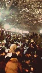 上野公園内で花見の宴を楽しむ人々