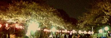 上野公園の夜桜(3/27)