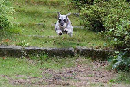 飛び犬ディア1