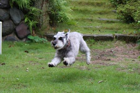 飛び犬ディア2