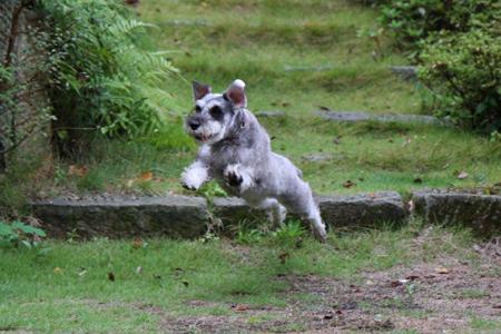 飛び犬ディア3