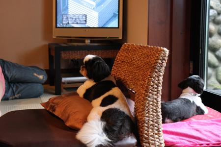 うぢゅはテレビ観るの