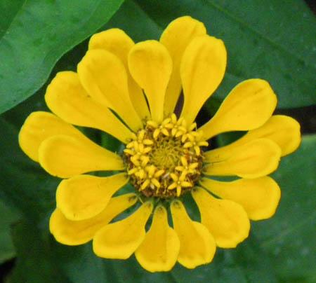 080921花の怒り