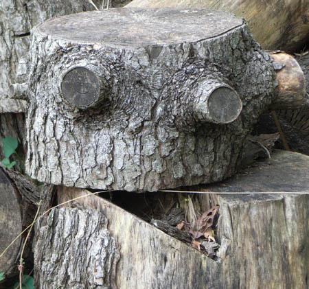 080927木のロボット