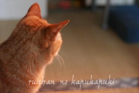 080603_rui_001.jpg