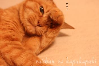 080609_rui_005.jpg