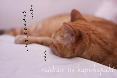 080715_rui_001.jpg