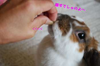 1DSC_0108.jpg