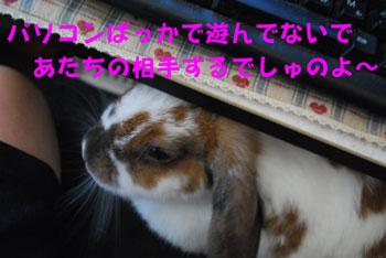 DSC_0004_20080815101634.jpg