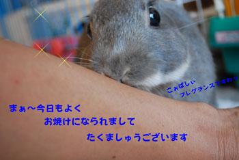 DSC_0090_20080725192502.jpg