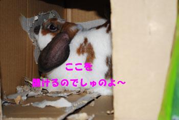 DSC_0103_20080812185956.jpg