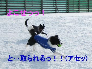 055_20090213034829.jpg