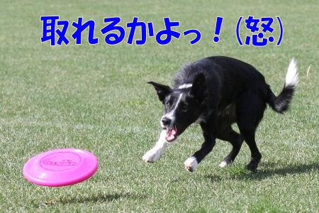 090_20081014141941.jpg