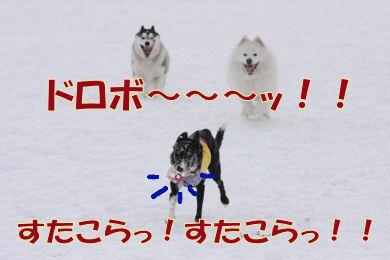 257_20081208133731.jpg