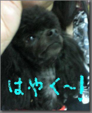 20090506saya-giii-hayaku.jpg
