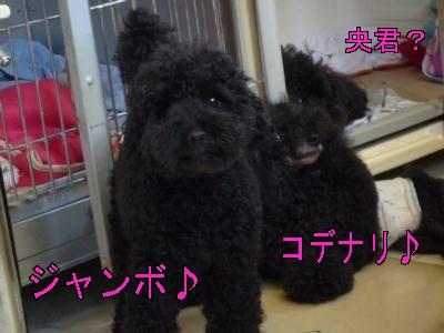 janbo_kode-moji400.jpg